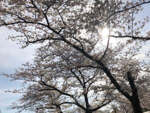 花見@万博公園_210329_0